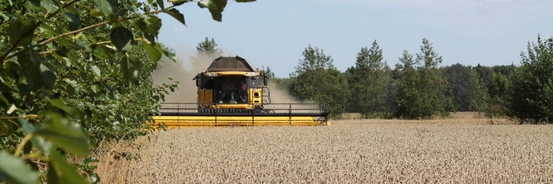 Energieholz und Getreide