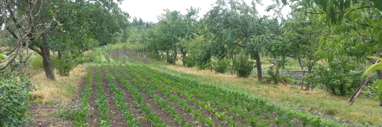 Multifunktionales Agroforstsystem, Foto: B. Kayser